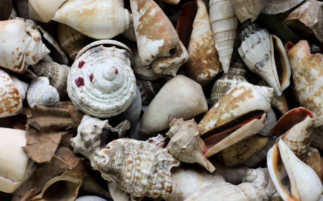 Sea Shells and Love