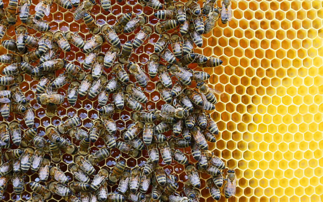 Honeybees, Ruth Bader Ginsburg and Hope