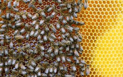 Honeybees, Ruth Bader Ginsburg and Hope